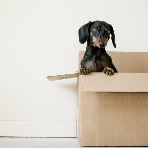 que-faire-avant-emmenager-dans-votre-nouveau-logement