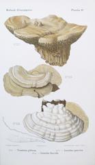 litographie-champignons-Mushrooms-laffichiste_affiches-authentiques-et-originales