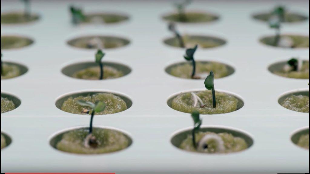 potager-hydroponique-interieur-ikea-deco-ikea