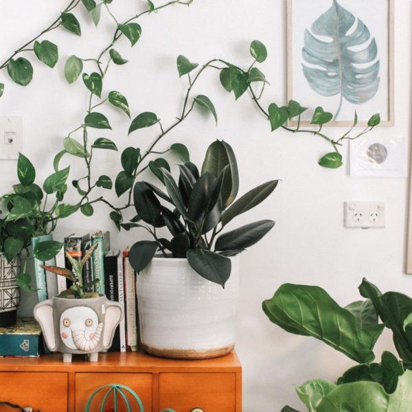ces-plantes-qui-nous-font-du-bien